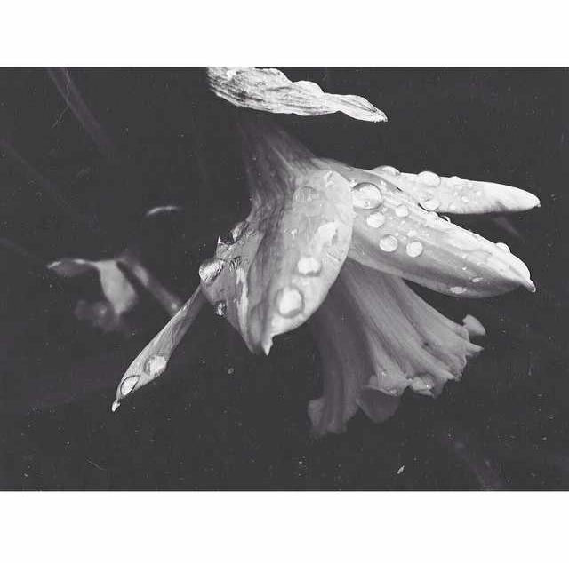 floralfeb 56.jpg
