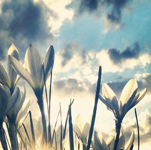 floralfeb 69.jpg