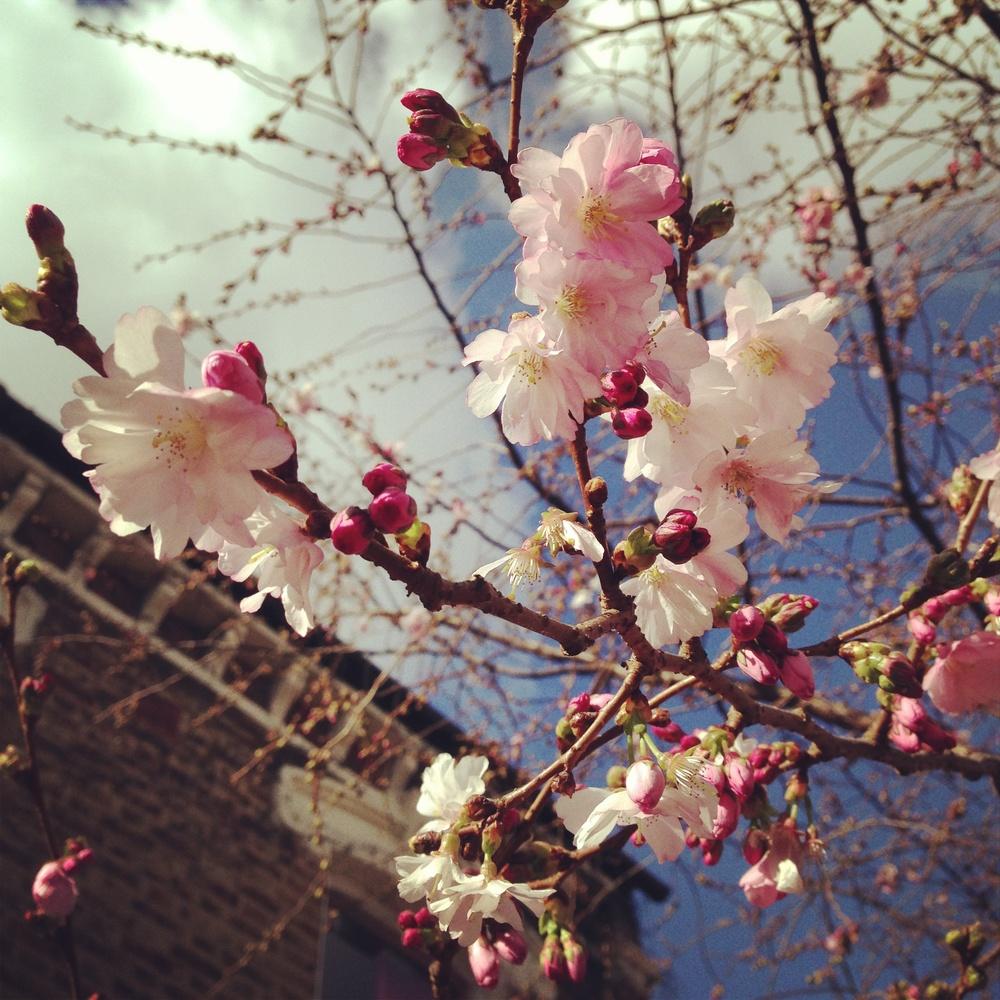 spring 19.jpg