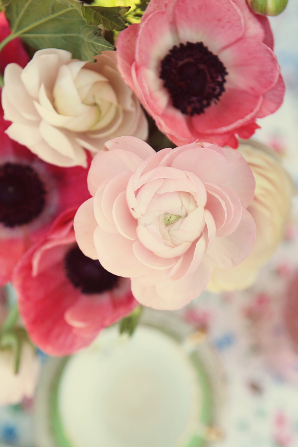 Ranunculus and anemone