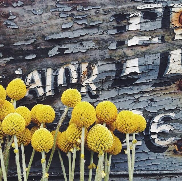floralapril 2.jpg