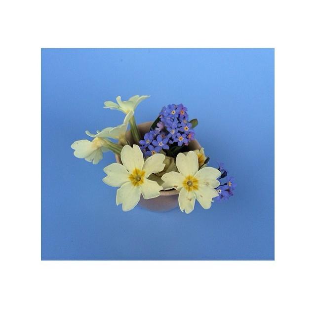 floralapril 6.jpg