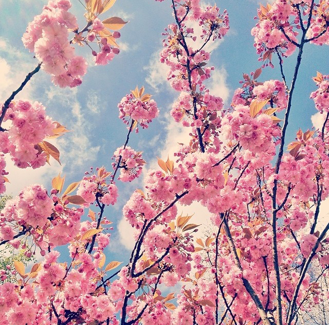 floralapril 16.jpg