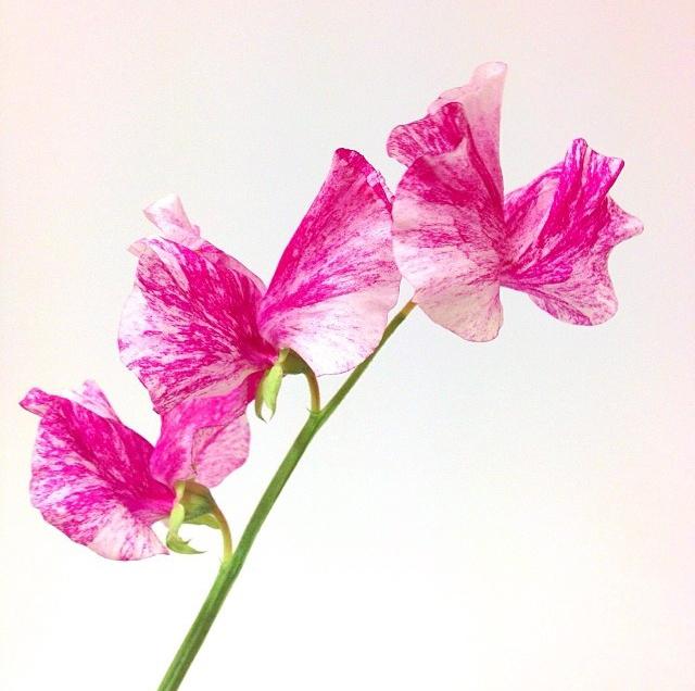 FloralApril 26.jpg