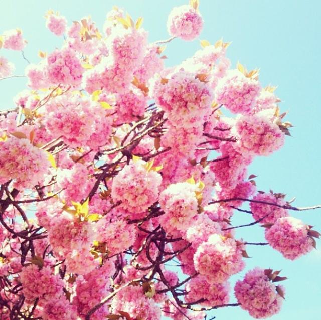 FloralApril 31.jpg