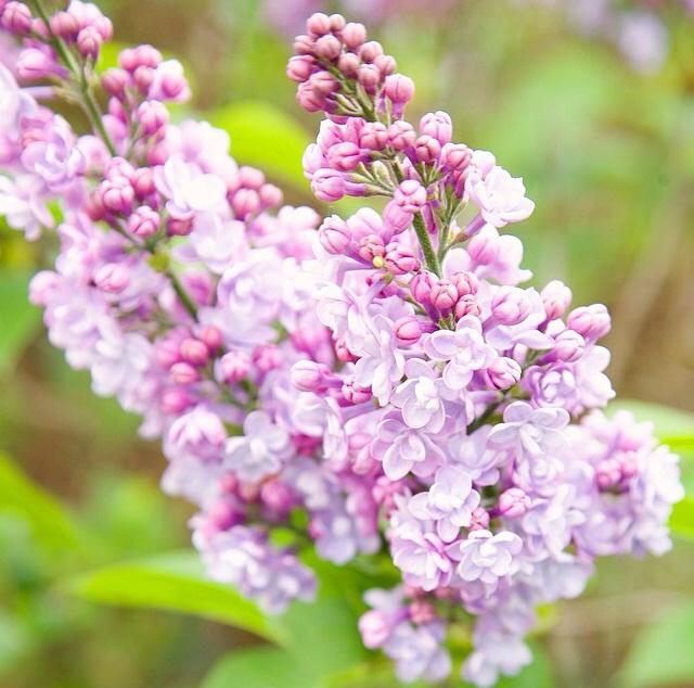 FloralFridayMay 101.jpg