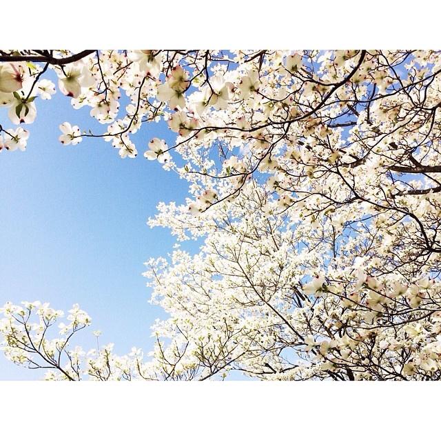 FloralFridayMay 103.jpg