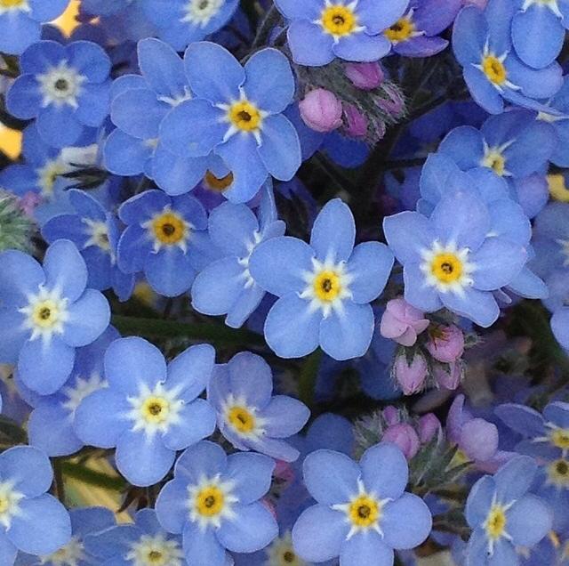 FloralFridayMay 109.jpg