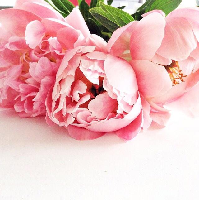 FloralFridayMay 100.jpg