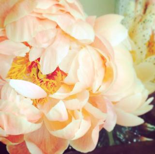 FloralFridayMay 115.jpg