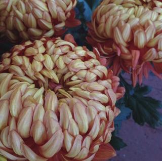 FloralFridayMay 119.jpg