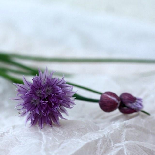 FloralFridayMay 133.jpg