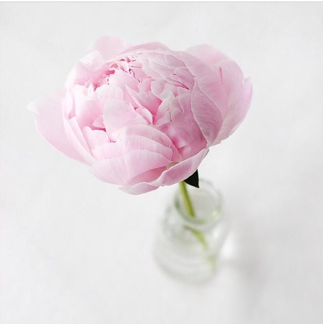 FloralFridayMay 130.jpg