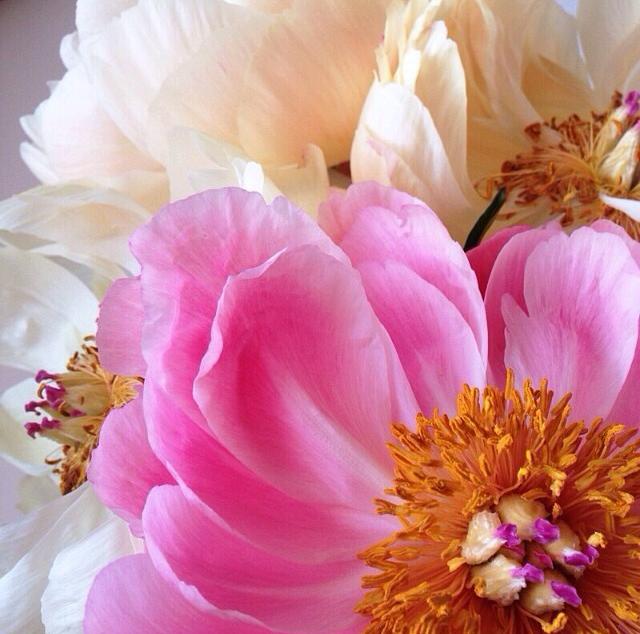 FloralMay 142.jpg