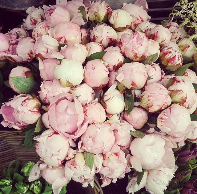 FloralMay 147.jpg
