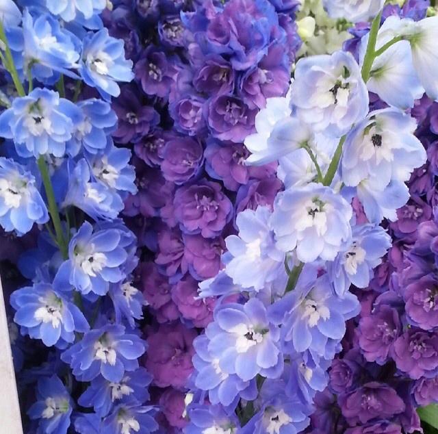 FloralFridayMay 153.jpg