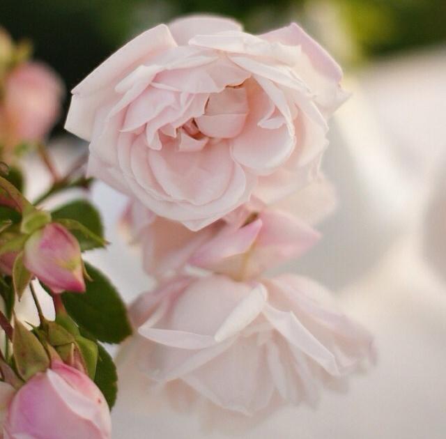 FloralFridayJune 2.jpg