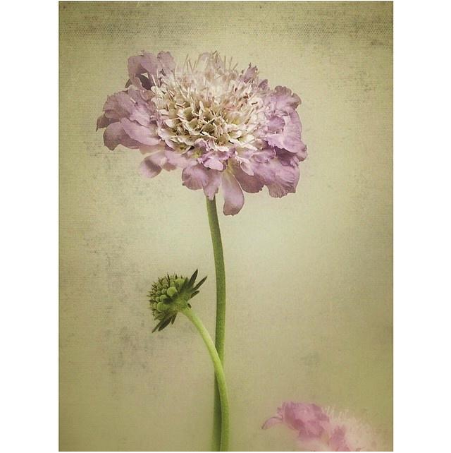 FloralFridayJune 1.jpg