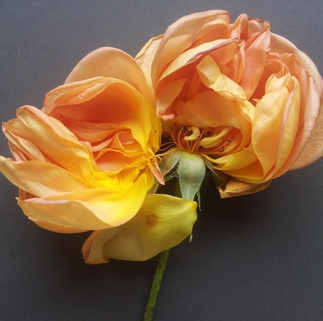 FloralFridayJune 4.jpg