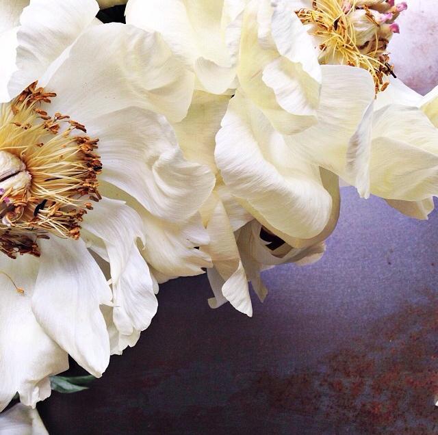 FloralFridayJune 5.jpg