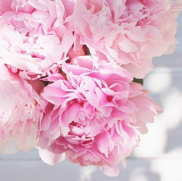 FloralFridayJune 8.jpg