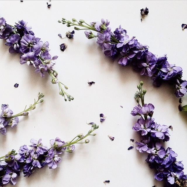 FloralFridayJune 7.jpg