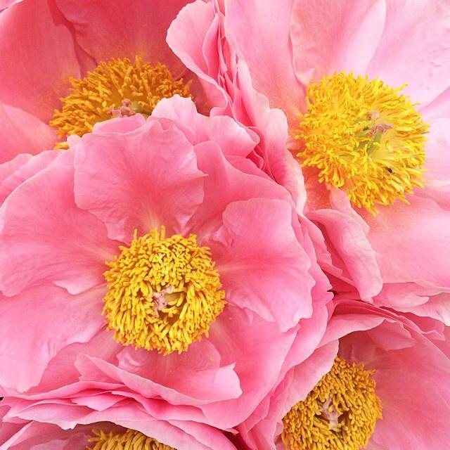 FloralFridayJune 9.jpg