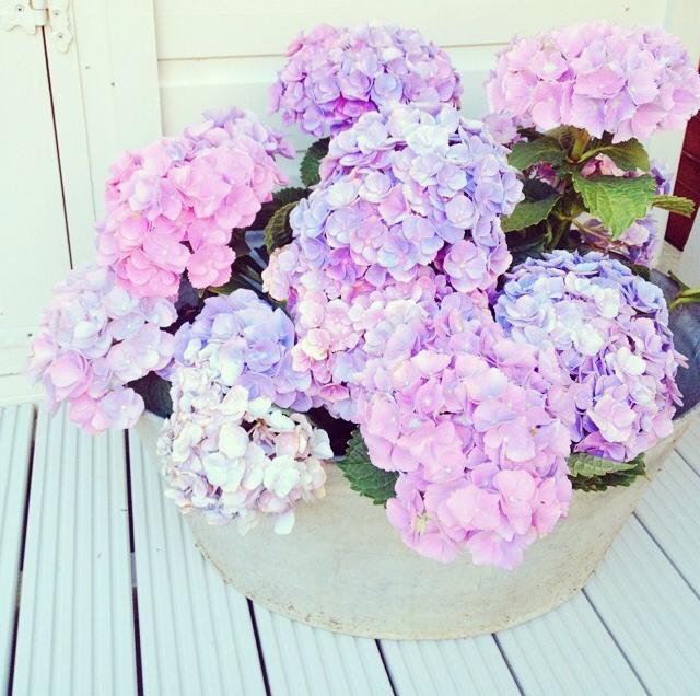 FloralFridayJune 25.jpg