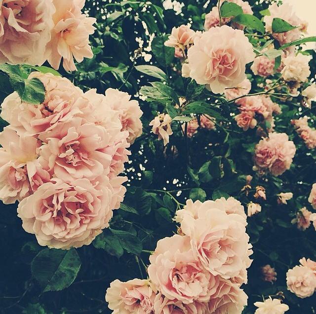 FloralFridayJune 14.jpg