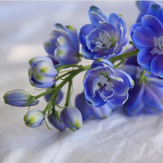 FloralFridayJune 38.jpg