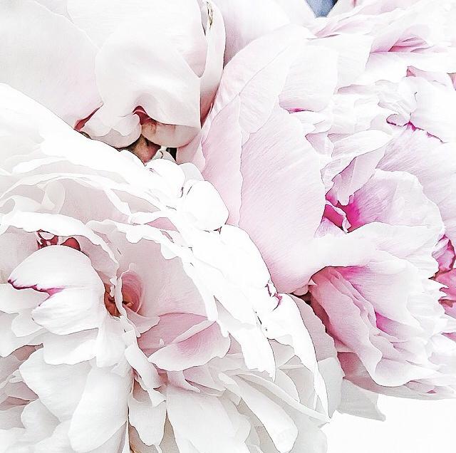 FloralFridayJune 30.jpg