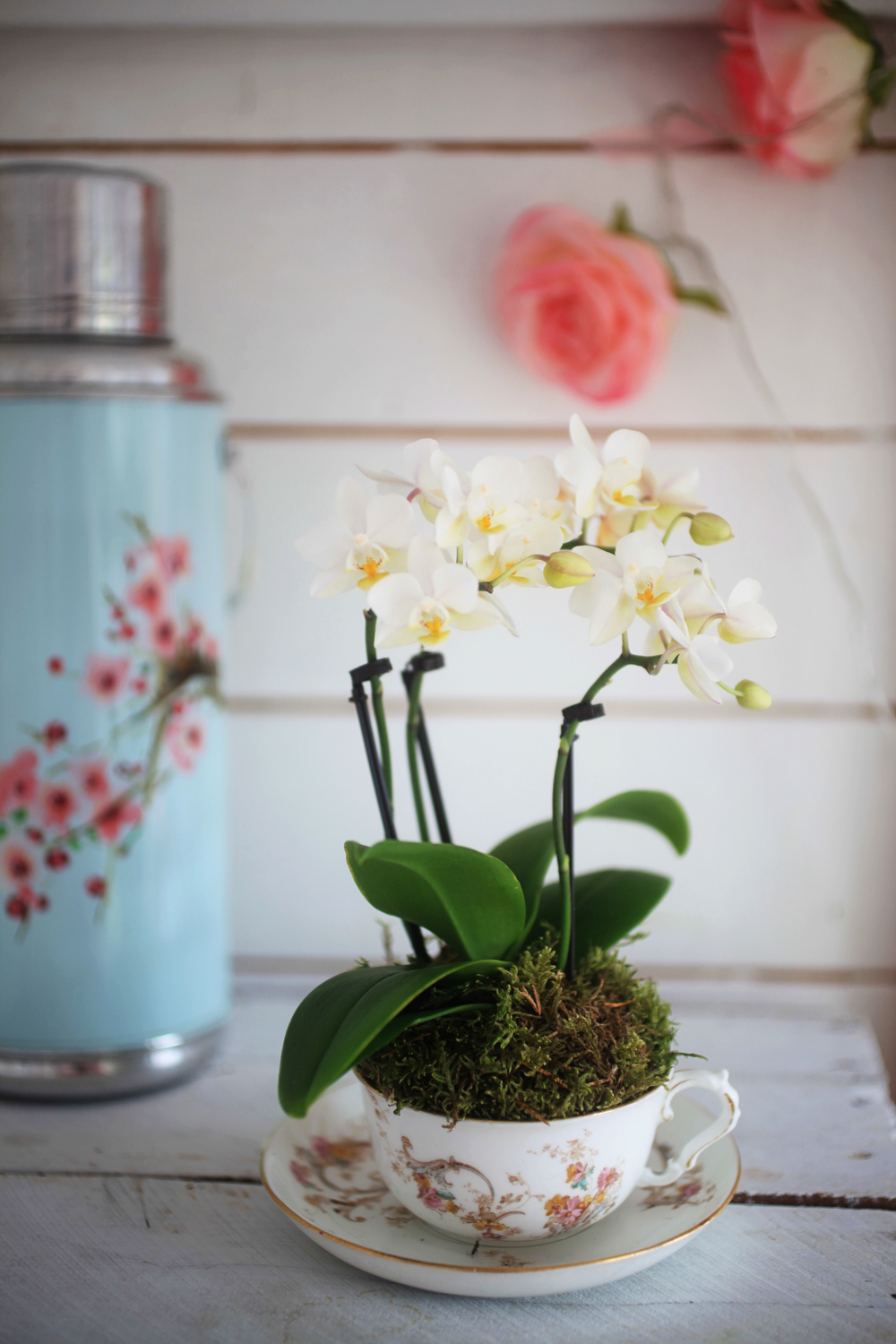 mini orchid in vintage tea cup