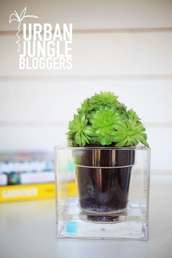 Boskke plant pot