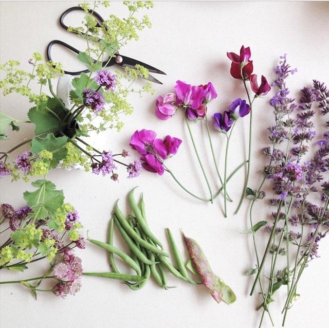 FloralFridayJune 54.jpg