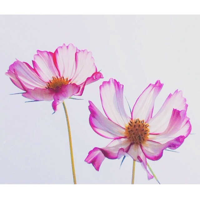 FloralFridayAugust 11.jpg