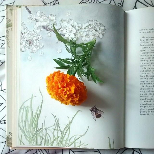 FloralFridayAugust 15.jpg