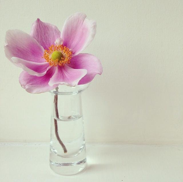 FloralFridayAugust 17.jpg