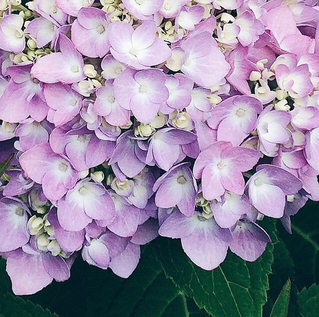 FloralSeptember 3.jpg