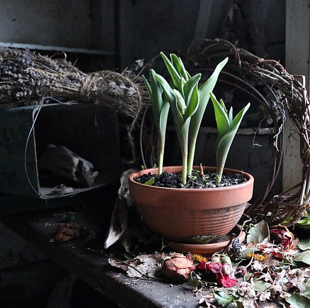 FloralSeptember 8.jpg