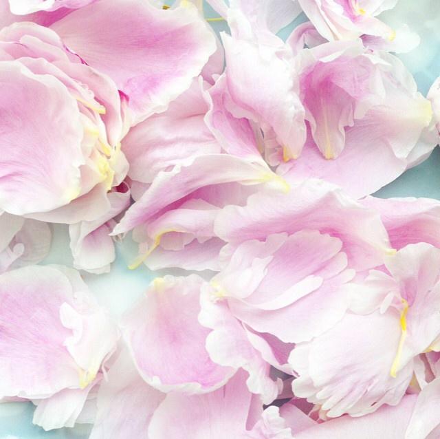 FloralSeptember 10.jpg