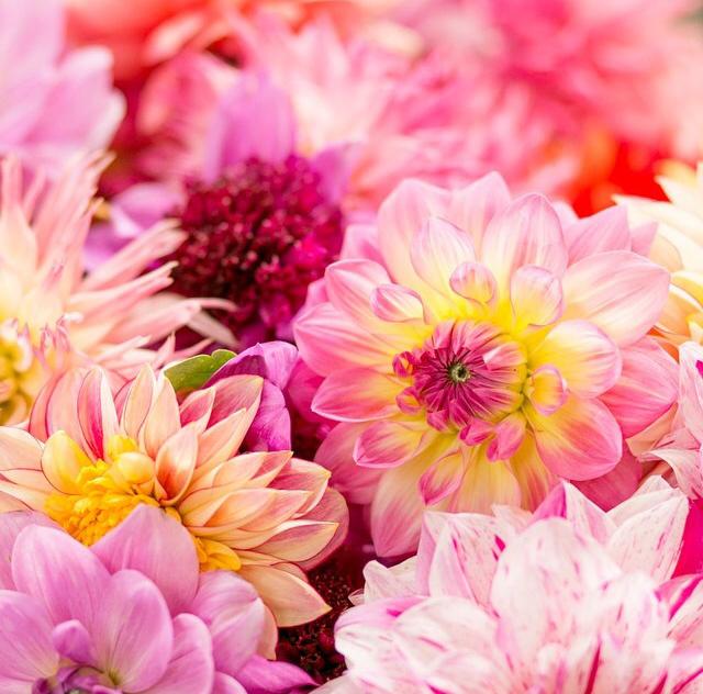 FloralSeptember 12.jpg