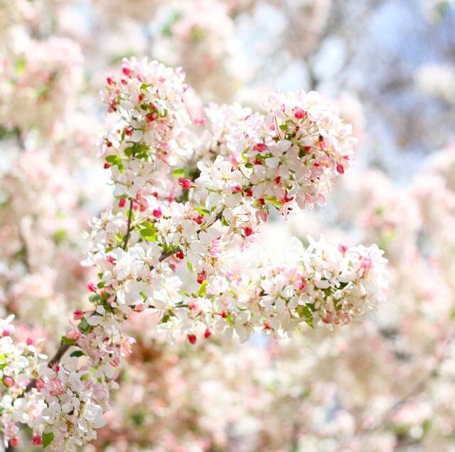 FloralSeptember 16.jpg