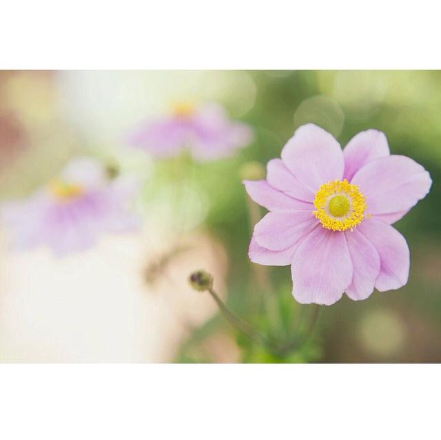 FloralSeptember 13.jpg