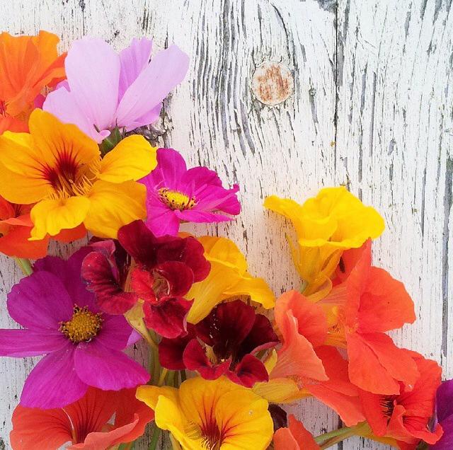 FloralSeptember 26.jpg