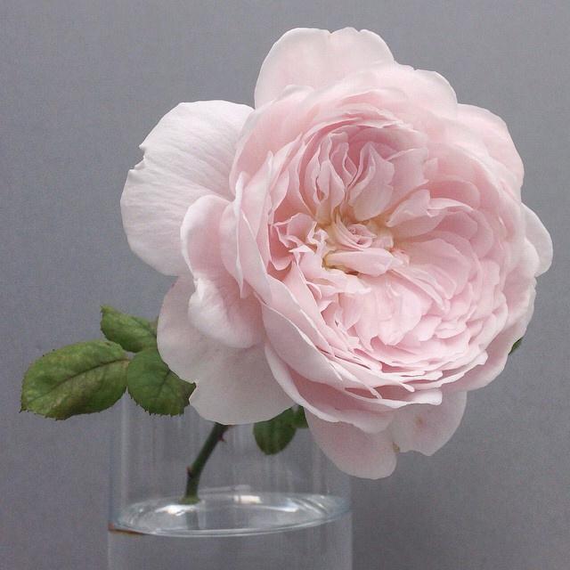 floraloctober 3.jpg