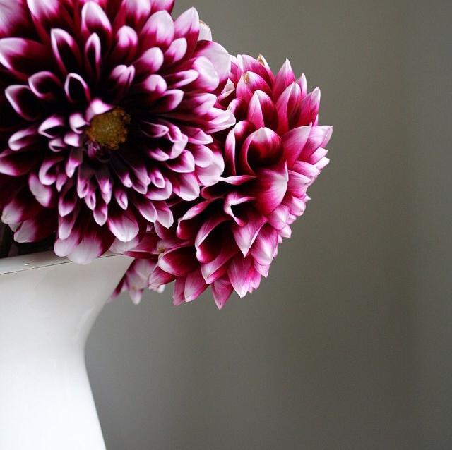 floraloctober 5.jpg