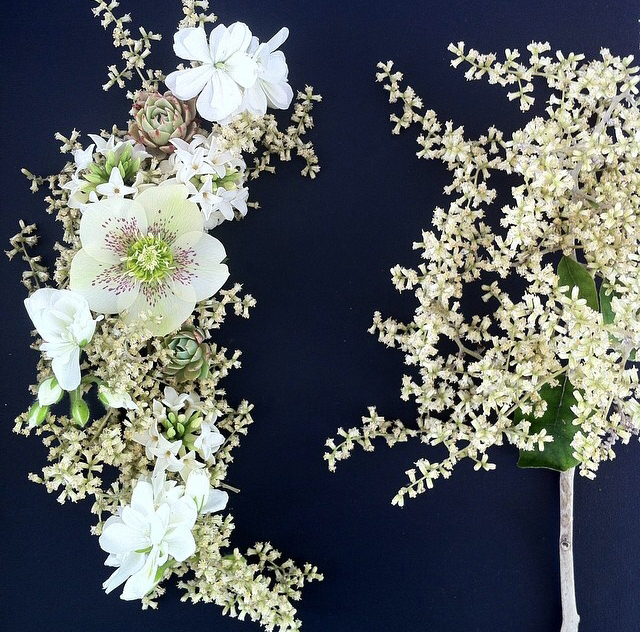 FloralOctober 23.jpg