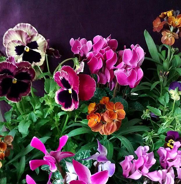 FloralOctober 28.jpg