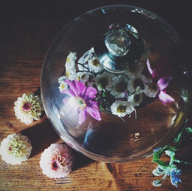 FloralOctober 29.jpg