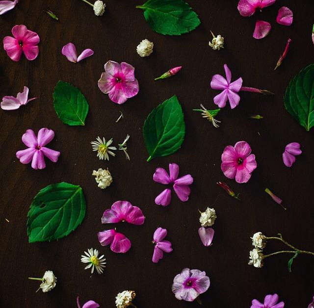 FloralOctober 20.jpg